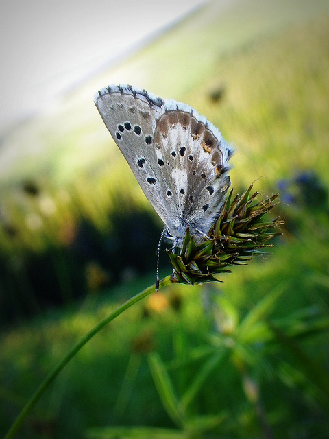 butterflyonskislope