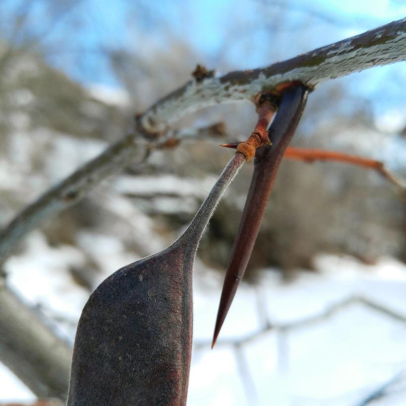 seedpodcrack